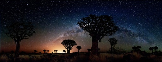 Quiver Trees by Night 2, 2012. 'The cool glow of our milky way contrasts with the warm light pollution from the nearby town of Keetmanshoop, Namibia, providing a colourful backdrop to a grove of Quiver Trees. This panorama was captured at the Quiver Tree Forest Restcamp, and covers a 230-degree view, composed of 12 exposures'